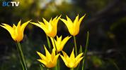 botanicalGardenBCTV.jpg